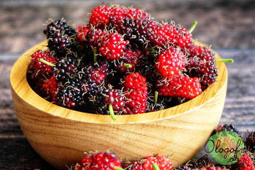 Mulberry-Mulberry