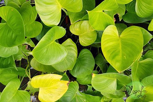 容易种植的植物可以装饰房子而不杂乱