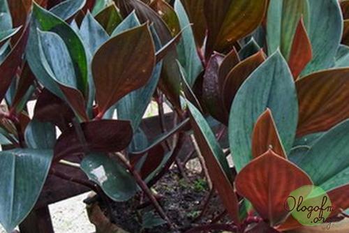 容易种植的植物可以装饰房子而不杂乱1