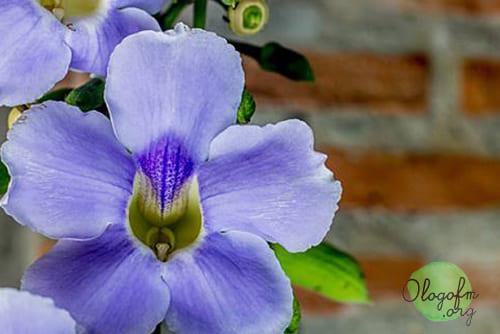 植物草药排毒1